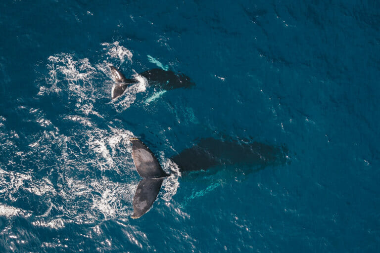 Dolphins and Whales by Bonita da Madeira