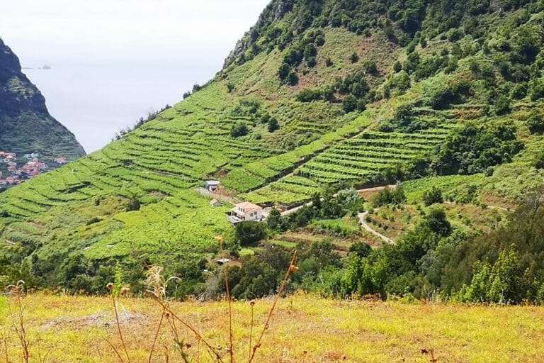 Madeira Wine Day Tour & Lunch in the Vineyard